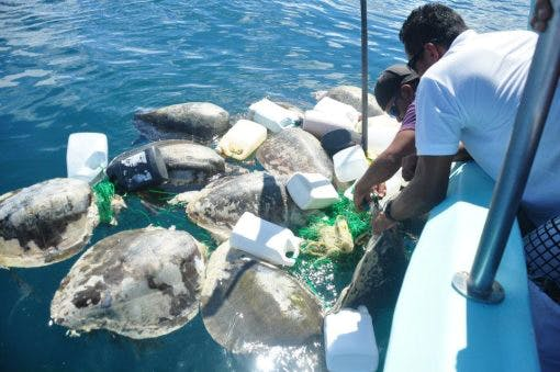 160614-wscf-28-chacon-p6-turtle-bycatch-1
