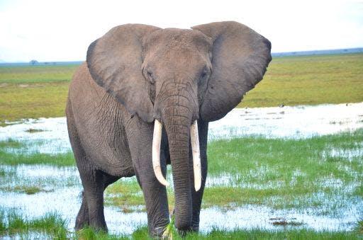 kahumbu_fieldw_elephant_kenya_hrs