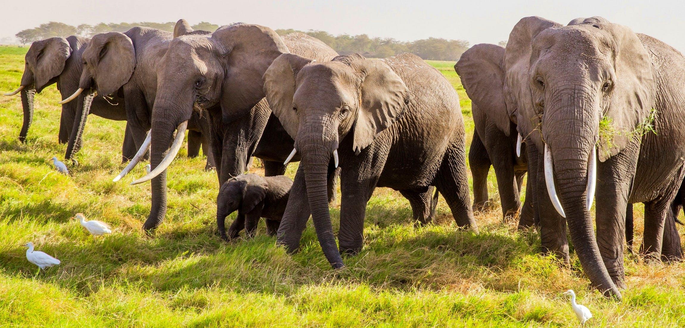 Bildresultat för elephants