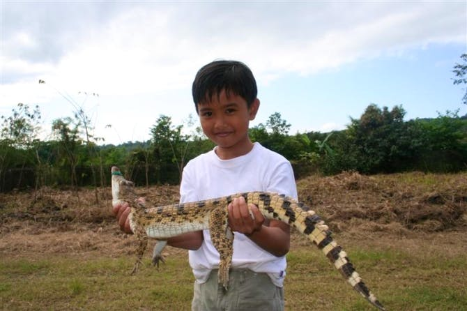 Child posing with crocodile befroe releasing it back to the wild