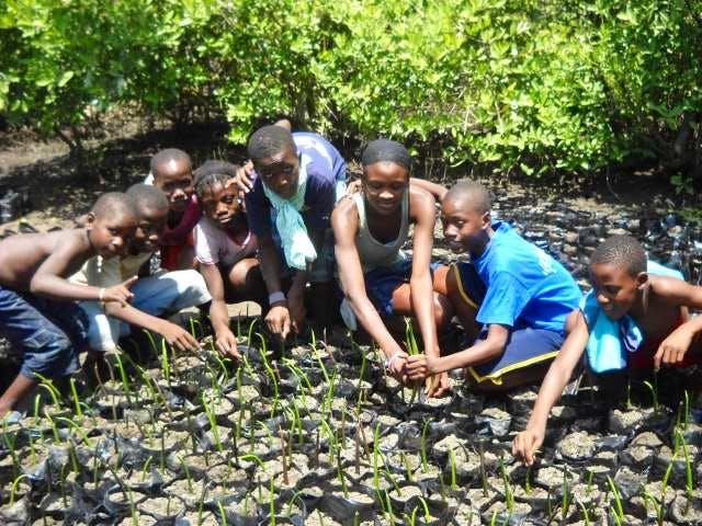 Kids planting mangrove nursery
