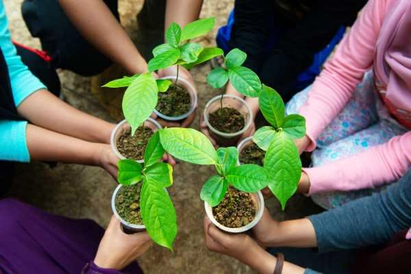 Reforestation - planting seedlings