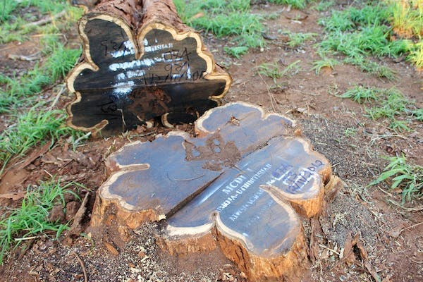 USE FSC certified log of blackwood