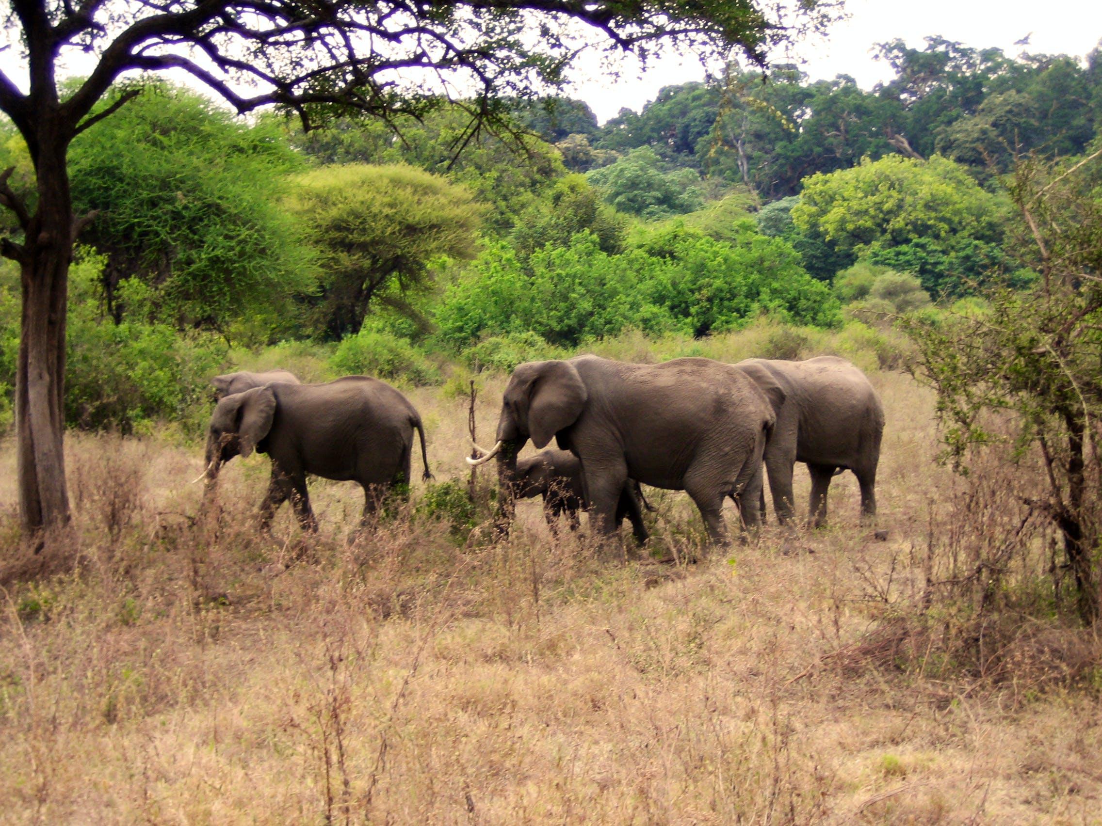 USE IMG_0489 Elephants