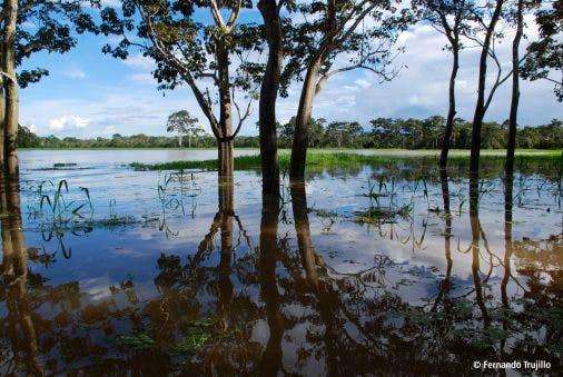 bosque-inundado
