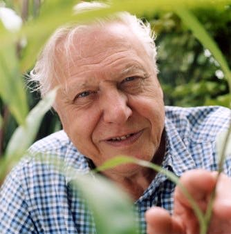 Image for Sir David Attenborough, WFN Trustee