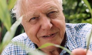 Image for 'Sir David Attenborough, WFN Trustee
